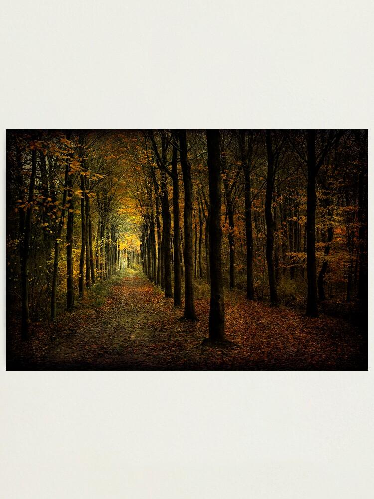 Alternate view of Woodland, light Photographic Print