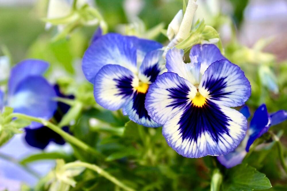 Flowers by Vmurph713