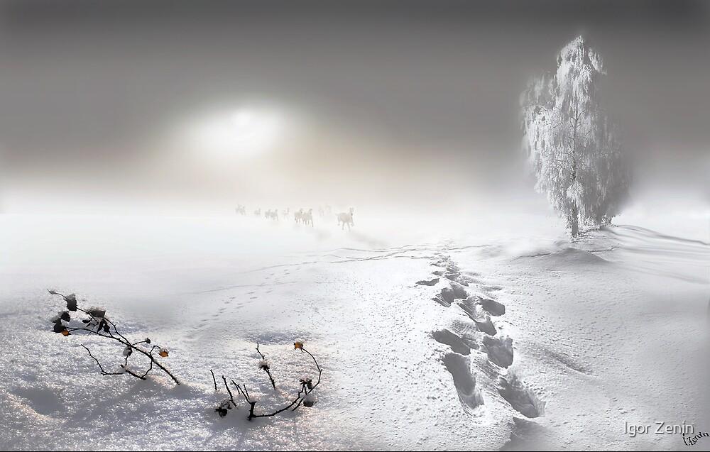 White Run by Igor Zenin