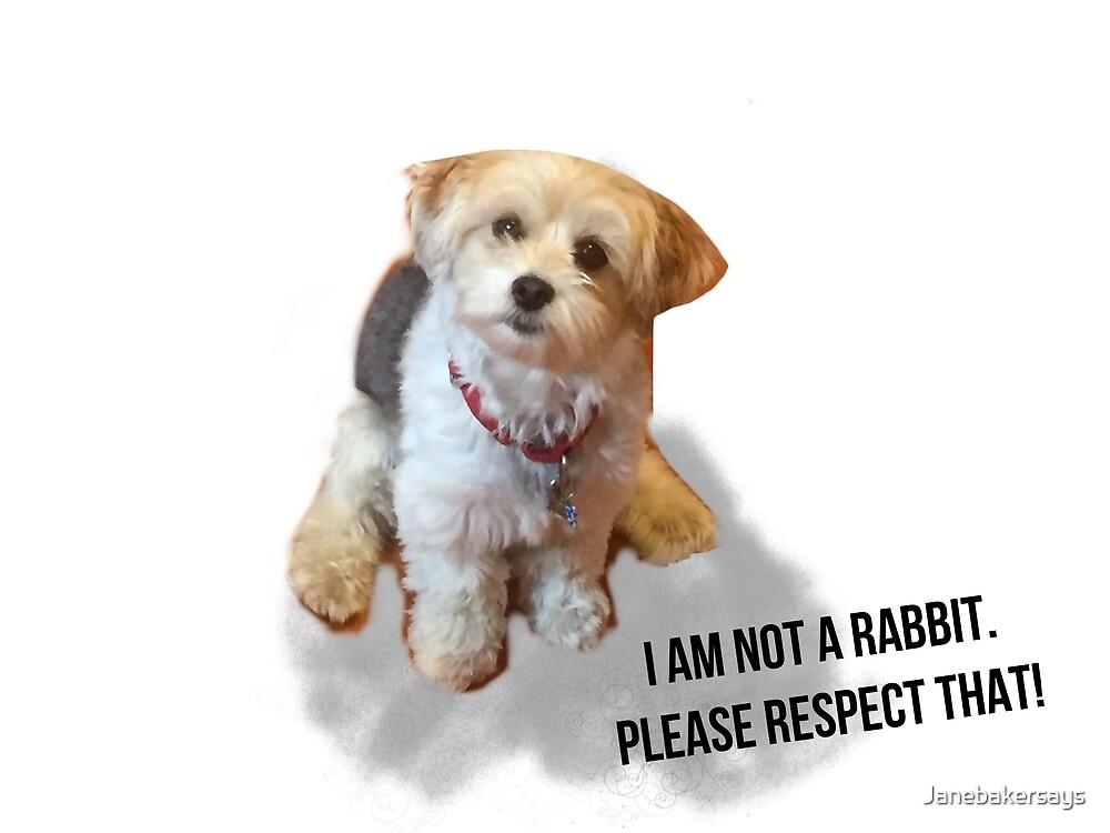 Dog not Rabbit  by Janebakersays