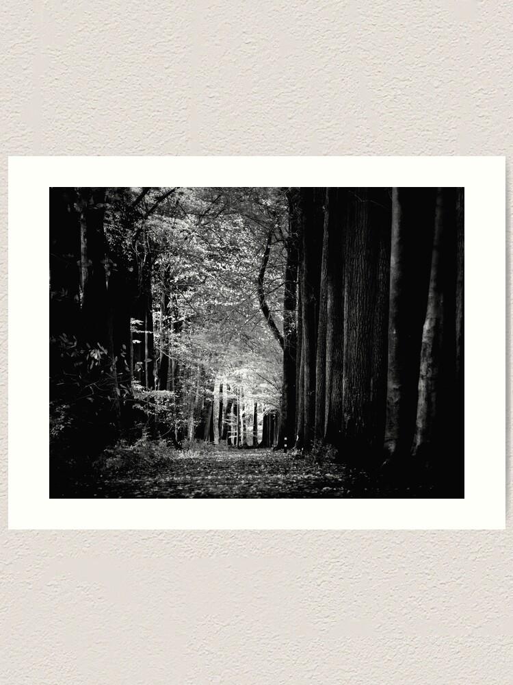 Alternate view of Light in woods b&w Art Print