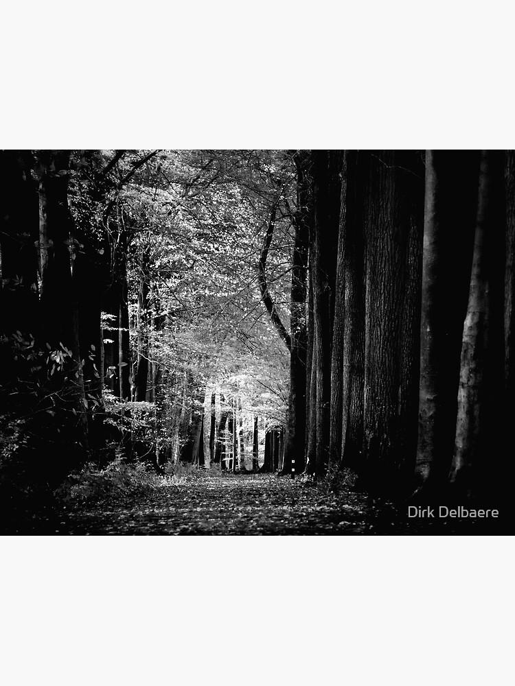 Light in woods b&w by Delbaere