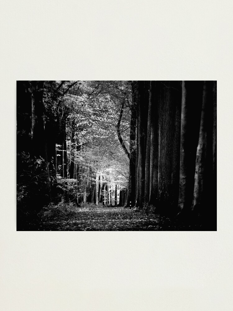 Alternate view of Light in woods b&w Photographic Print