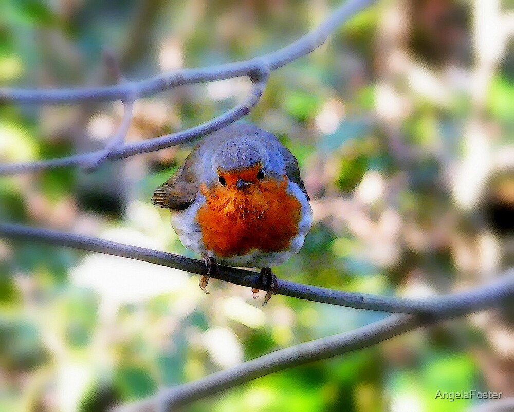 Robin in woodland by AngelaFoster