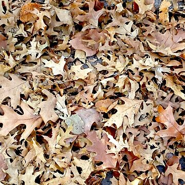 Autumn leaves by Lovemydesigns