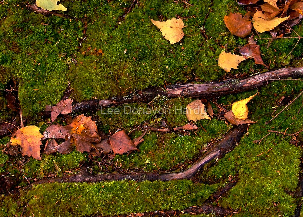 Forest Floor...October by Lee Donavon Hardy