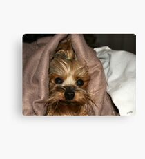 Spoiled ? Canvas Print
