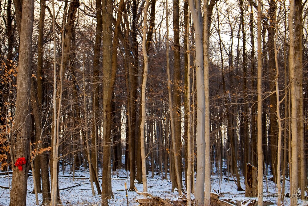 Countryside: Winter Trees by dsgnguy