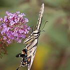 Butterfly by bwatkinsphoto
