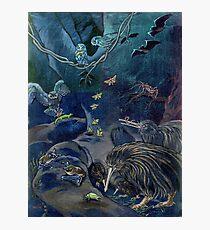 Kiwi, Bats, Morepork and More Photographic Print