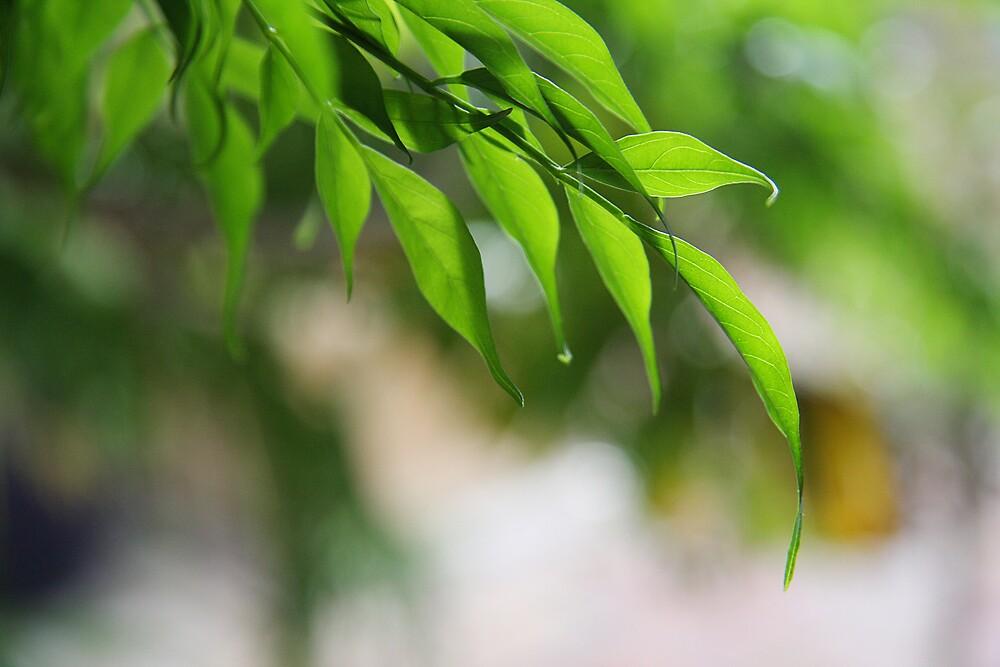 Leaf by Jye Murray