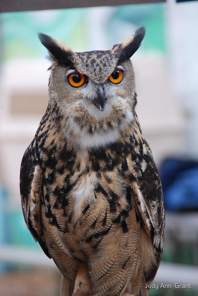 Owl so pretty  by Judy Grant