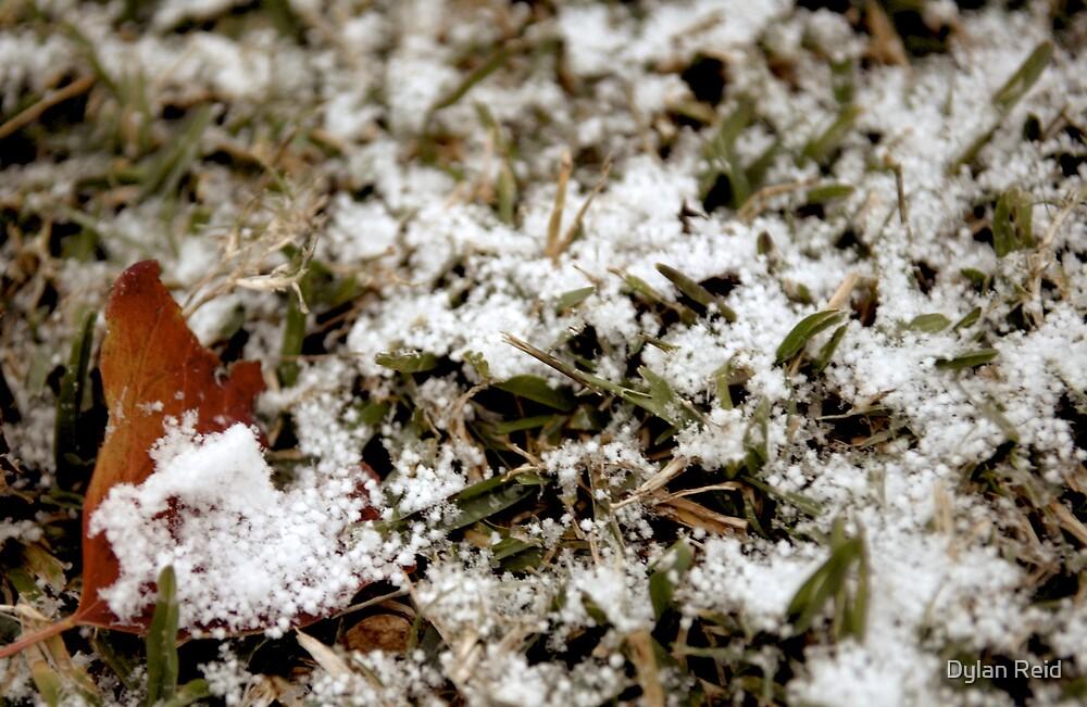 Snow in Texas. by Dylan Reid
