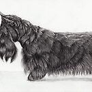 Scottish terrier by doggyshop