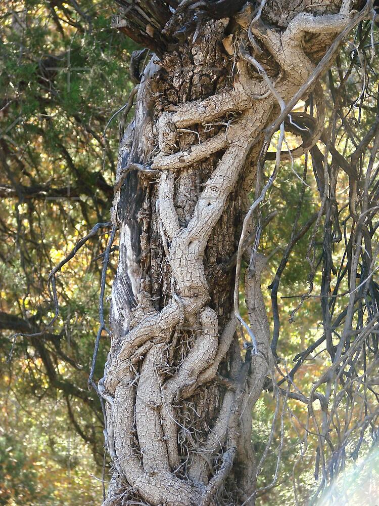 Ramsey Canyon Arizona - twisted trees by Kimberly Miller