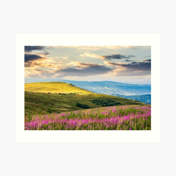 wild flowers on the mountain hill at sunrise Art Print