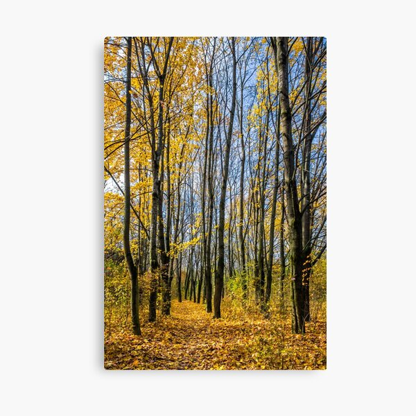 forest in foliage on sunny autumn day Canvas Print