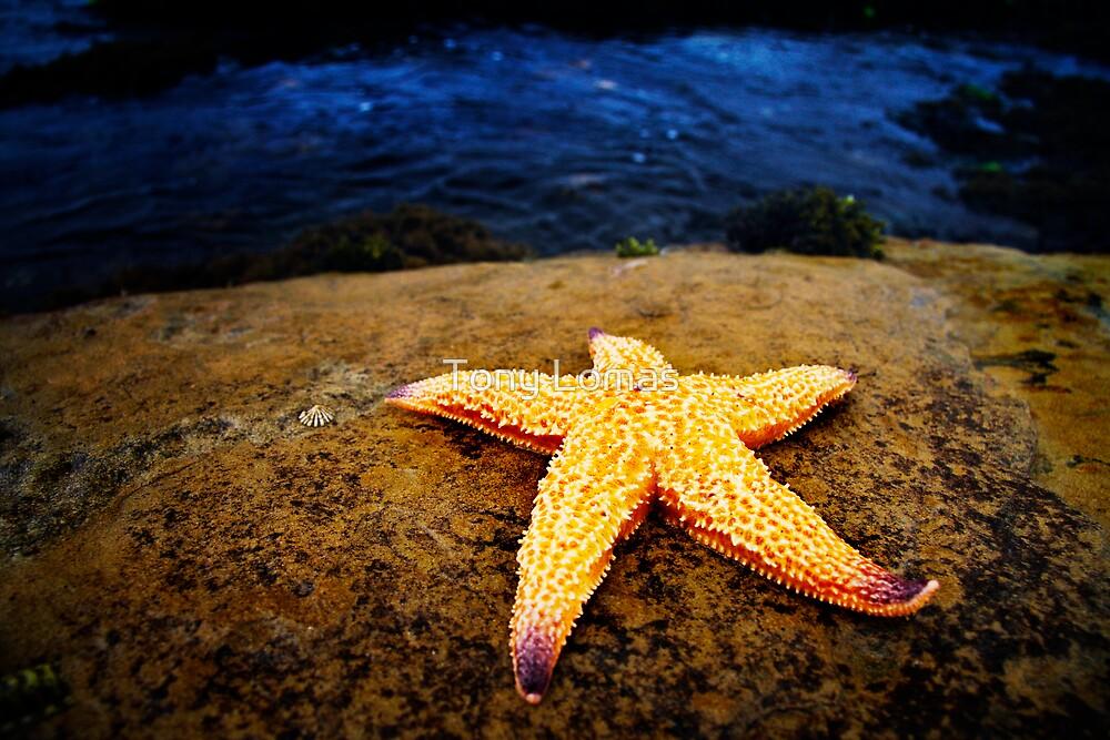 Star Gazing by Tony Lomas