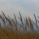 Atlantic Beach, NY Dune Grass by KarenDinan