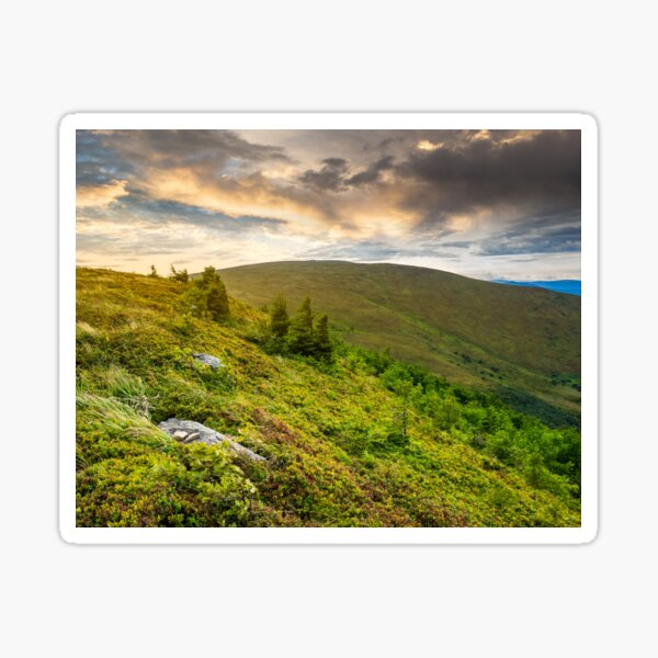 stones and conifer trees on hillside at sunrise Sticker