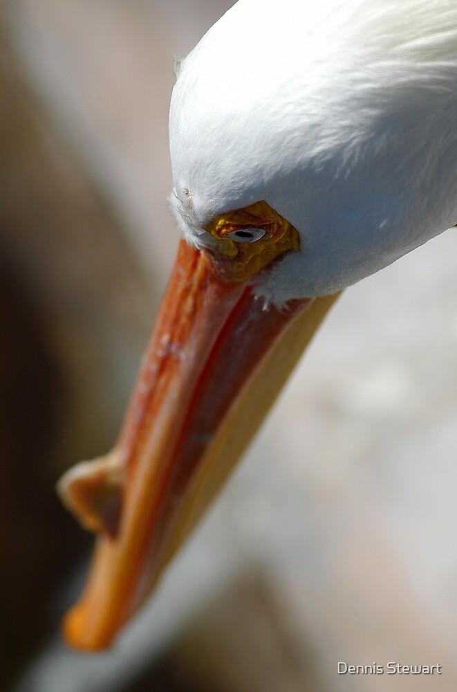Closeup Pelican by Dennis Stewart