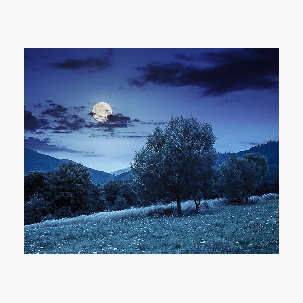 meadow near the forest in mountains at night  Photographic Print