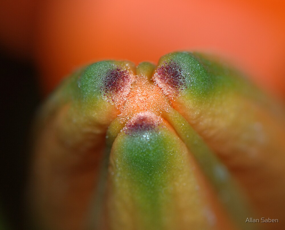 Heart of the Flower by Allan Saben