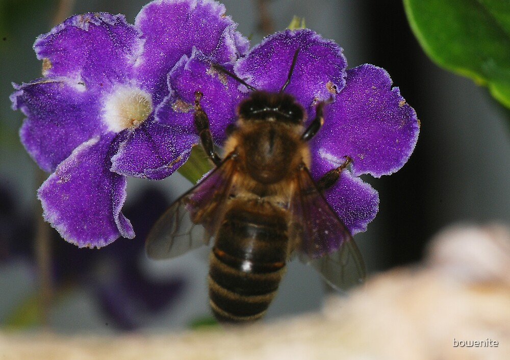 'Bee on purple flower' by bowenite