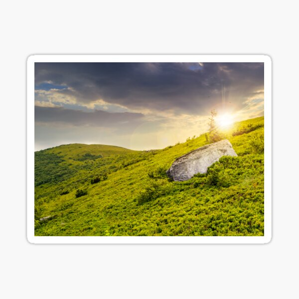 lonely conifer tree and stone at sunset Sticker