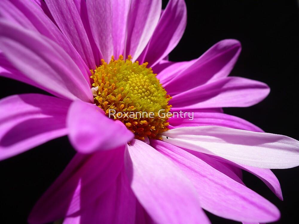 Bursting Purple by Roxanne Gentry