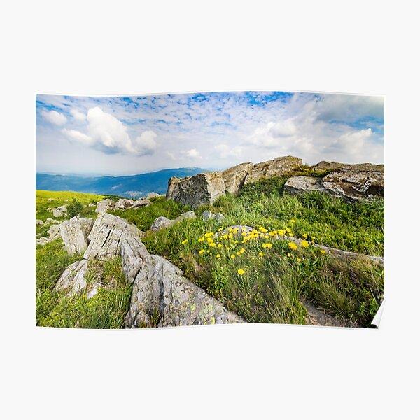 dandelions among the rocks on hillside Poster