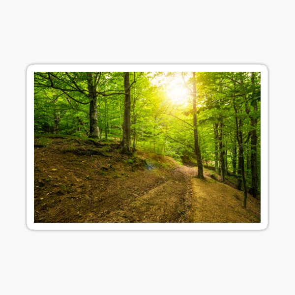 path in to deep ancient forest Sticker