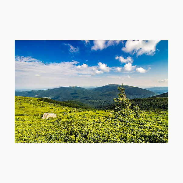 conifer tree with stone on hillside Photographic Print