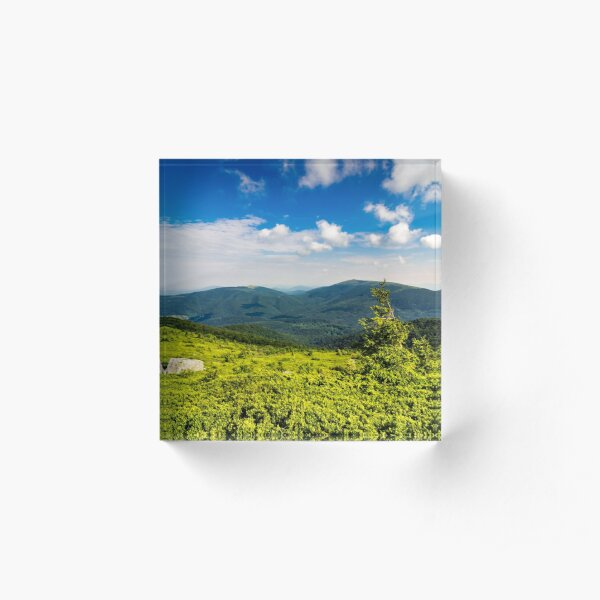 conifer tree with stone on hillside Acrylic Block