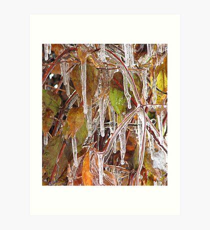 Icy Clematis Art Print