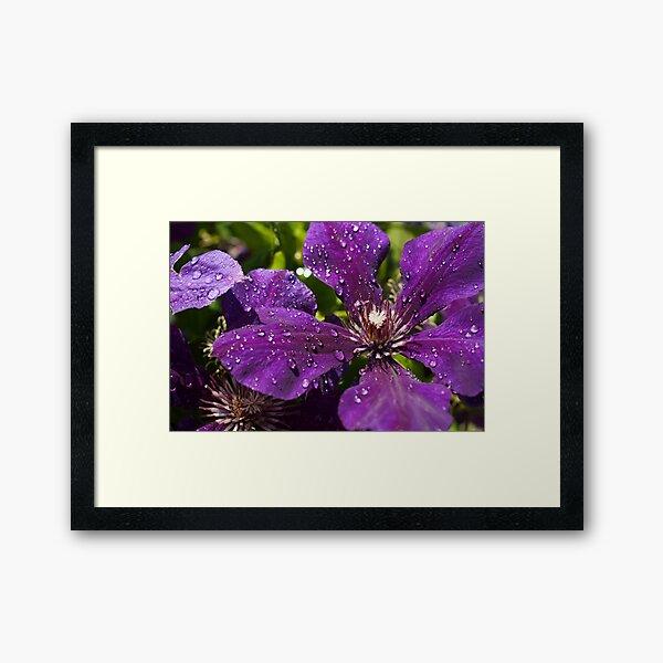 Dew Drops on Purple Flowers Framed Art Print
