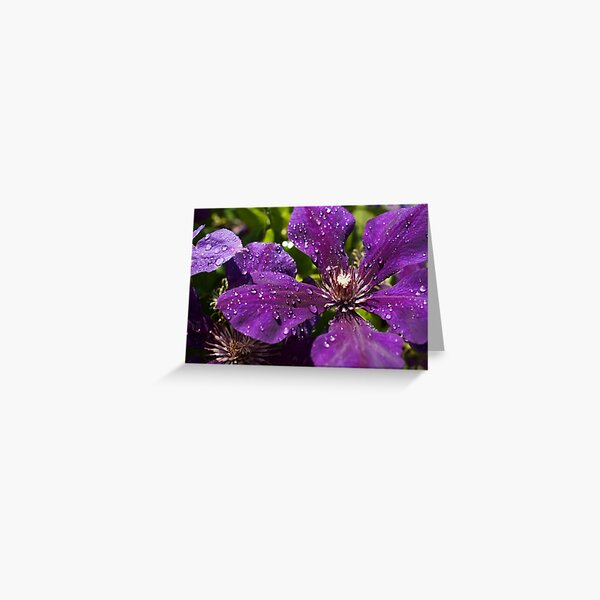 Dew Drops on Purple Flowers Greeting Card