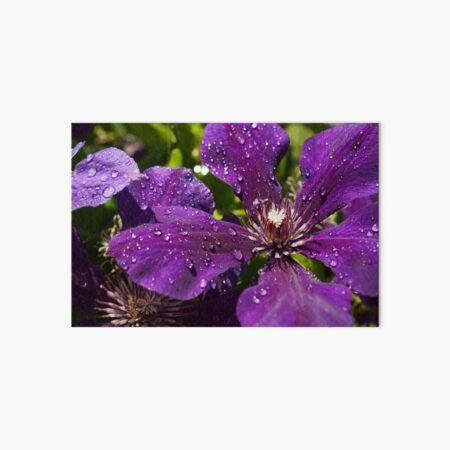 Dew Drops on Purple Flowers Art Board Print