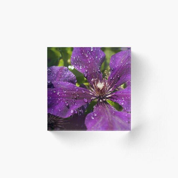 Dew Drops on Purple Flowers Acrylic Block