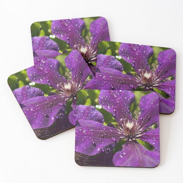 Dew Drops on Purple Flowers Coasters (Set of 4)