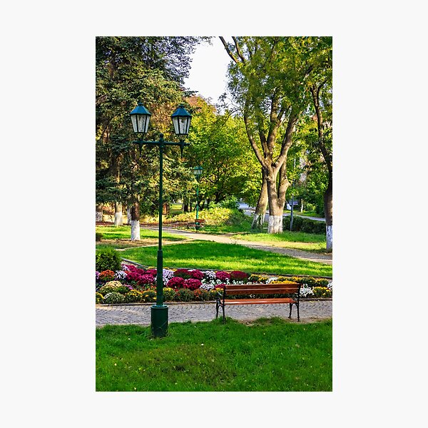 City lights in the park Photographic Print