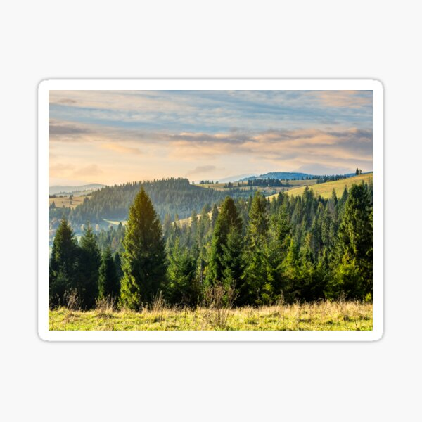coniferous forest in  mountains at sunrise Sticker