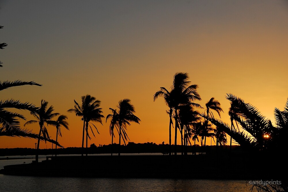 Sunset and palm trees. by sandyprints