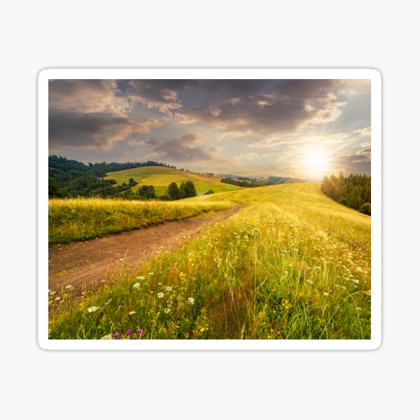 road through the meadow on hillside at sunset Sticker