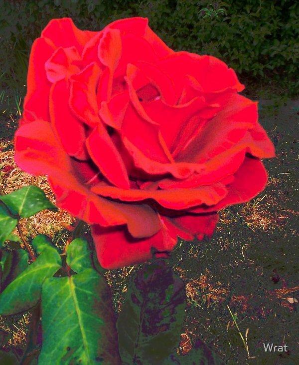 57. Rose by Wrat