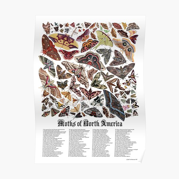 Moths of North America Poster