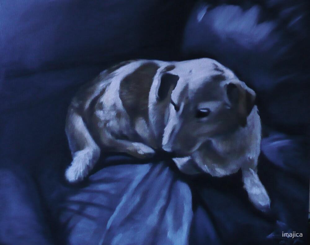 Pet portrait commission by imajica