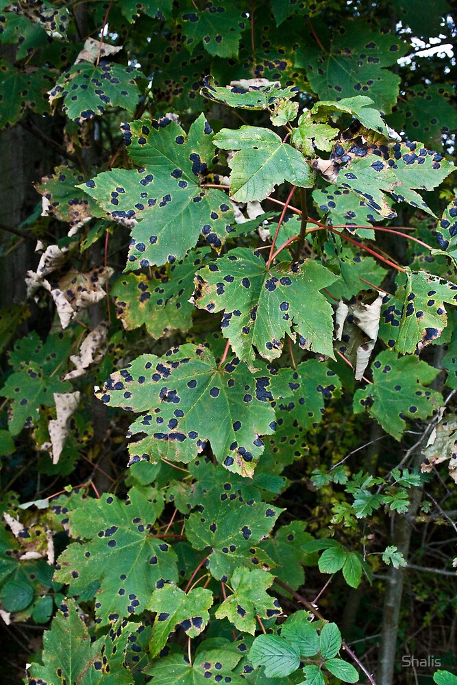 Spotty Leaves by Shalis