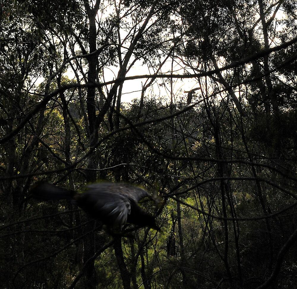 Darkness Visible by John Shortt-Smith