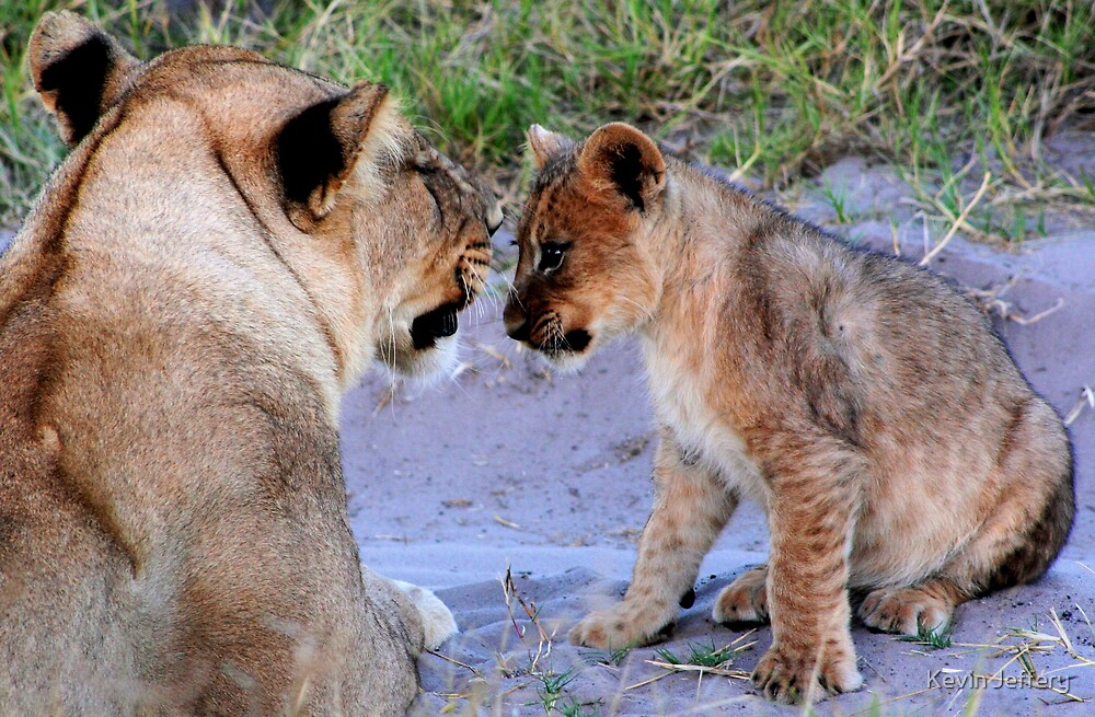 Lioness with Cub by Kevin Jeffery